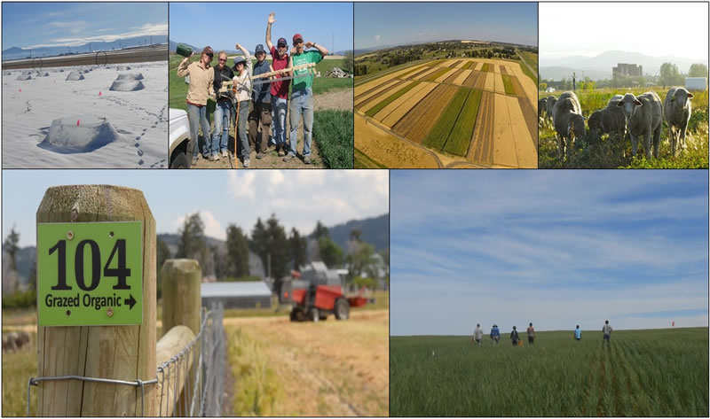 Cropland Weed Ecology and Management Laboratory, decorative banner, agricultural photo collage