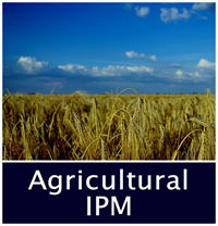 Agricultural IPM decorative photo, wheat field.