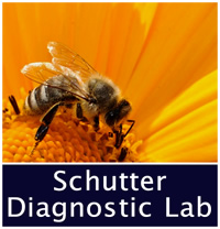 Schutter Diagnostic Lab decorative photo, honey bee on yellow flower